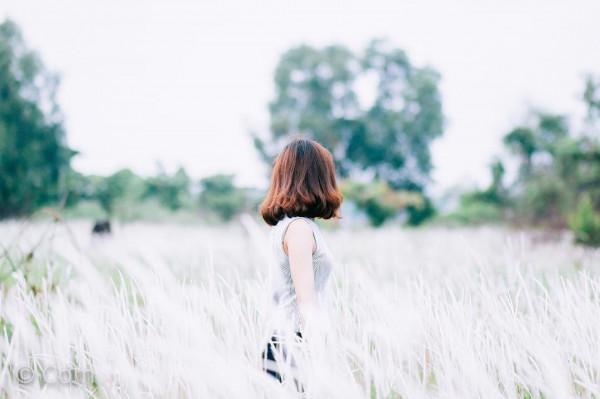 cỏ lau1