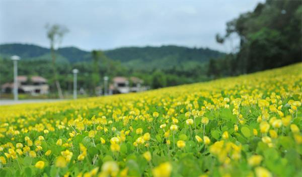 Đặt vé máy bay giá rẻ thăm mảnh đất Hoa vàng cỏ xanh