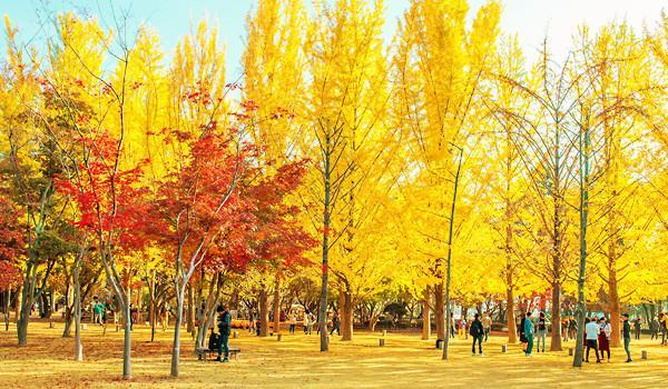 mùa thu mang tên Hàn Quốc3