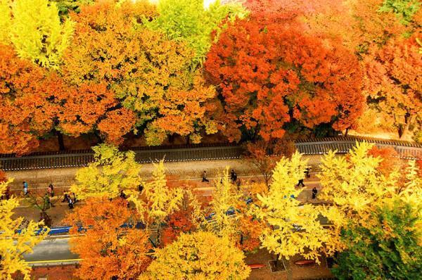 mùa thu mang tên Hàn Quốc4