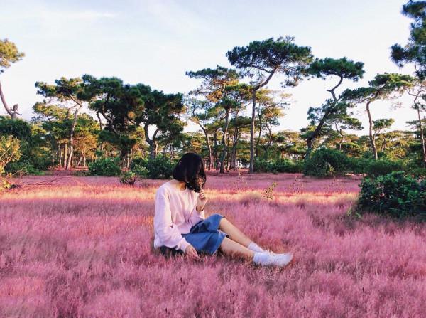 Cánh đồng cỏ hồng.3