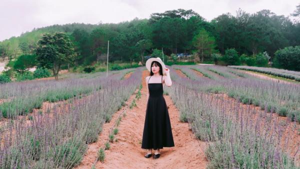 Cánh đồng hoa oải hương.1