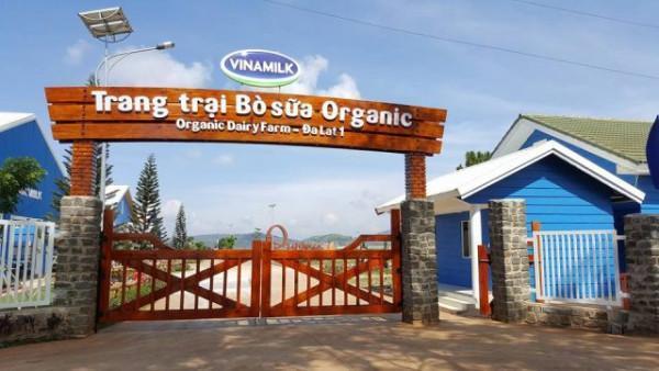 Trang trại bò sữa organic3