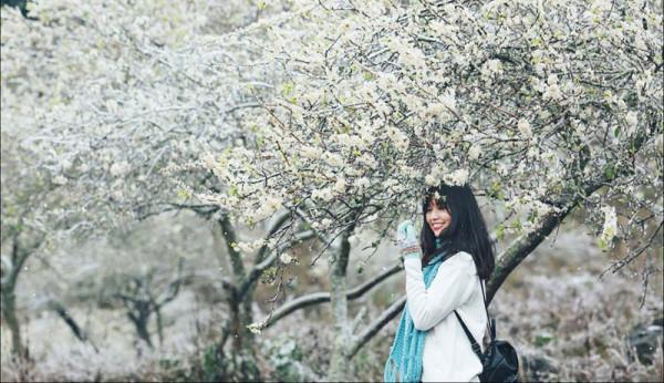 hoa mạn 1