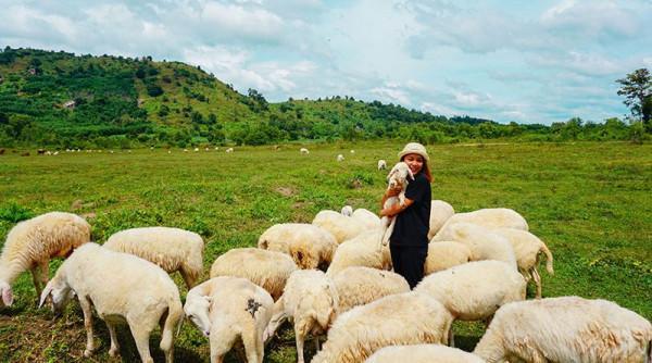 Nông trại cừu Long Hải Vũng Tàu.1