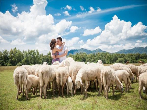 Nông trại cừu Long Hải Vũng Tàu.2