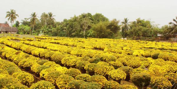 Ngất ngây với không gian nhuộm đủ sắc màu của vườn hoa Sa Đéc1