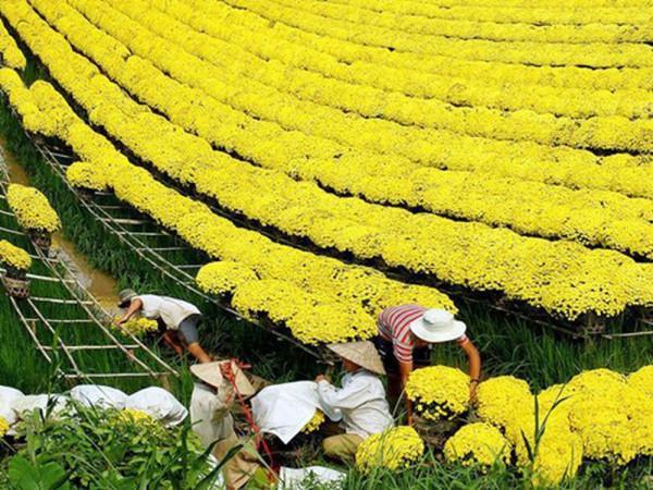 Ngất ngây với không gian nhuộm đủ sắc màu của vườn hoa Sa Đéc2