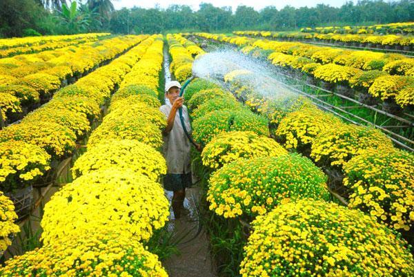 Ngất ngây với không gian nhuộm đủ sắc màu của vườn hoa Sa Đéc7
