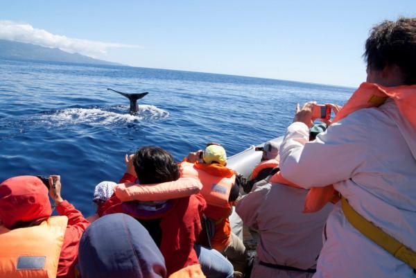 Quần đảo Azores6