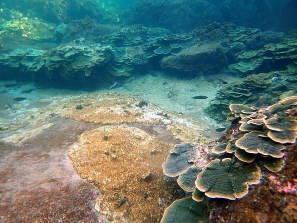 Quần đảo Thổ Chu5