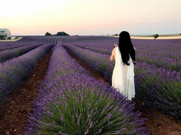 thiên đường hoa oải hương,1