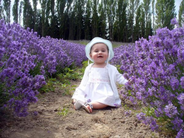 thiên đường hoa oải hương,8