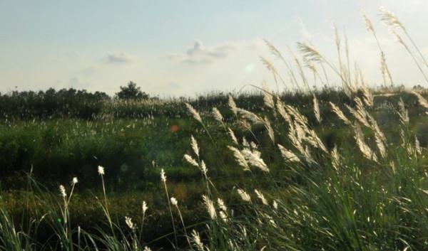 Di tích lịch sử Bãi Sậy Sông Đầm