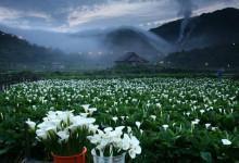 Book vé máy bay đến Đài Loan du lịch Dương Minh Sơn