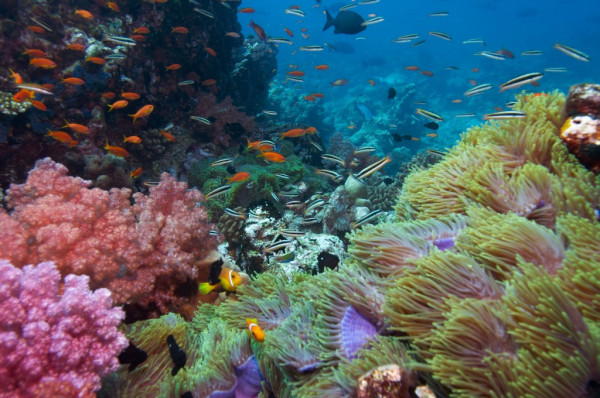 Lặn ngắm san hô ở Hòn Thơm1