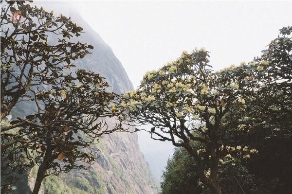 Những bông hoa đỗ quyên tím khoe sắc trên nền trời xanh1