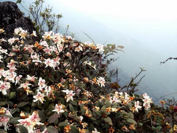 Những bông hoa đỗ quyên tím khoe sắc trên nền trời xanh2