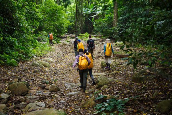 Trải nghiệm đi bộ trong rừng