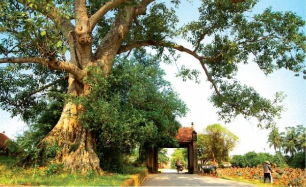 làng cổ Đường Lâm2