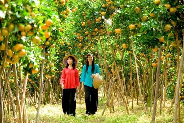 8. Miệt vườn trái cây
