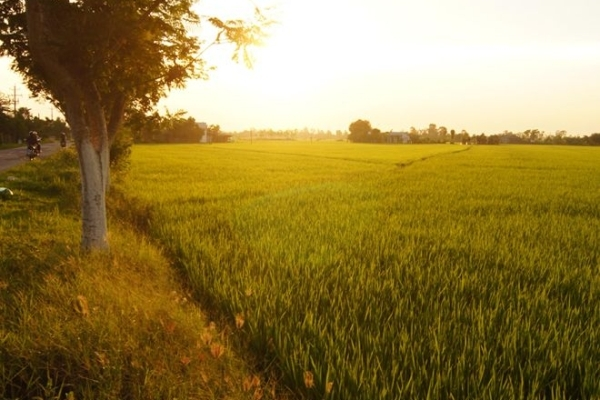 Lang thang mùa vàng tại thung lũng Bắc Sơn Việt7