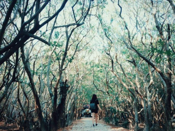 rừng ngập mặn Rù Chá