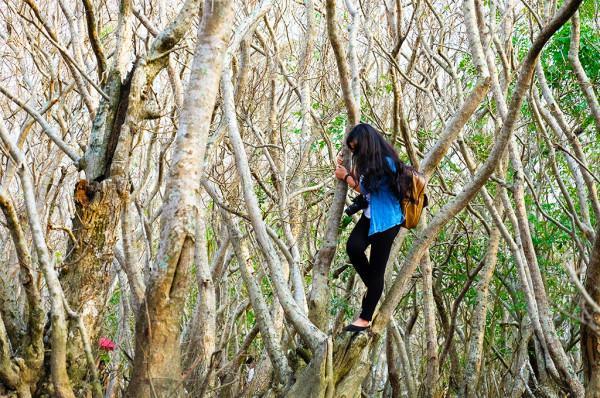 rừng ngập mặn Rù Chá1