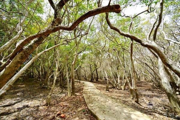 rừng ngập mặn Rù Chá3