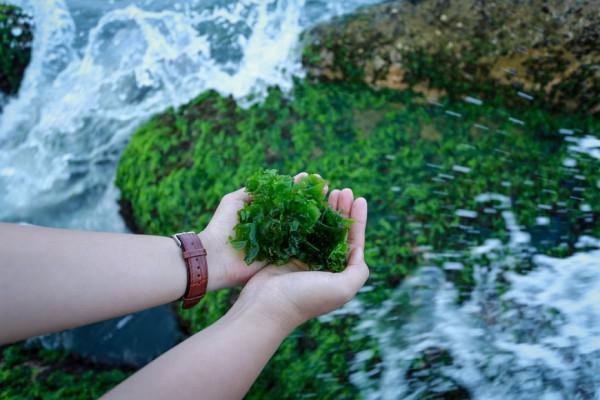 Bãi đá rêu