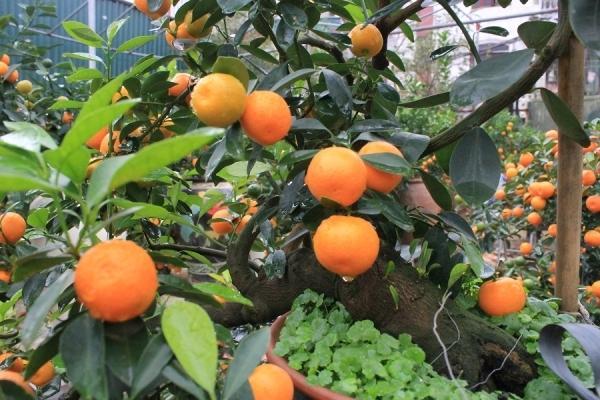 Làng vườn Bách Thuận1