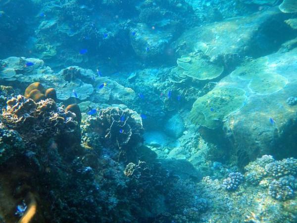 Quần đảo Thổ Chu4