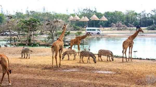 Safari World