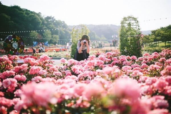 3.     Công viên Hoa Hồng (Hà Nội)1