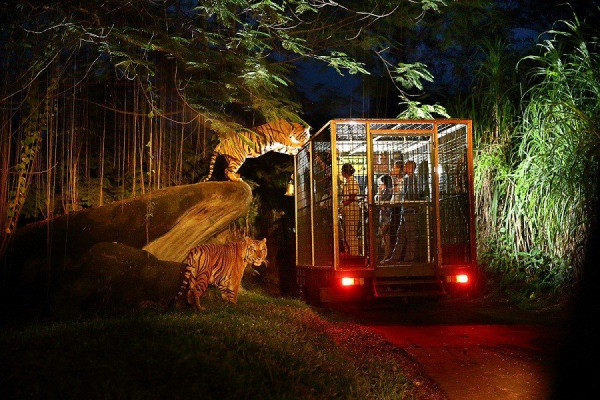 Night Safari1