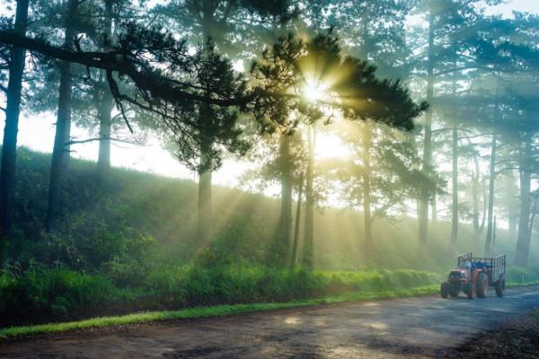Đà Lạt – phố núi trong sương và lãng mạn1