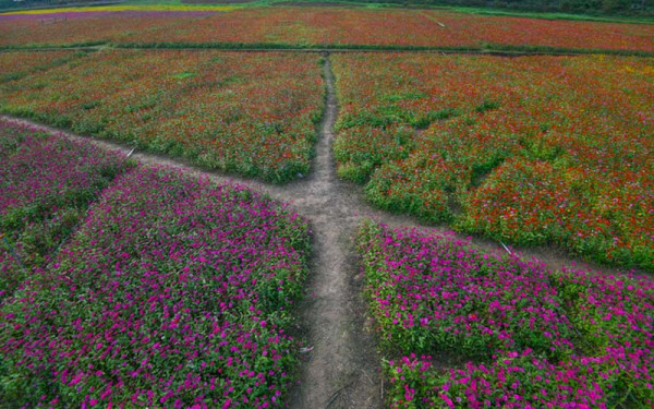 Lang thang mùa vàng tại thung lũng Bắc Sơn6