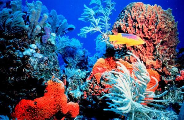 Viện Hải dương học Nha Trang1