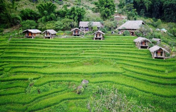 Eco Palms House.1