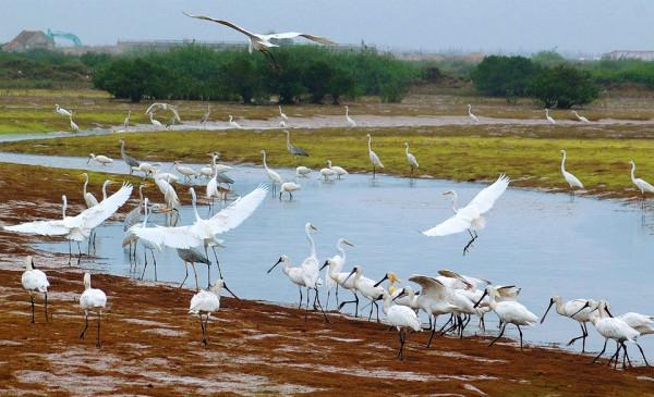 Vườn quốc gia Xuân Thủy1