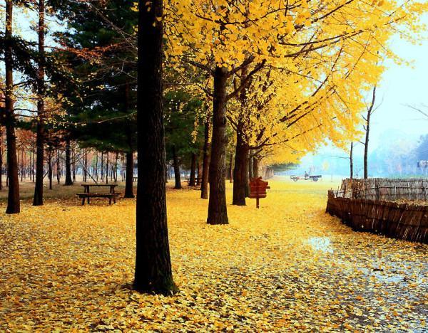 thiên đường mùa thu mang tên Hàn Quốc3