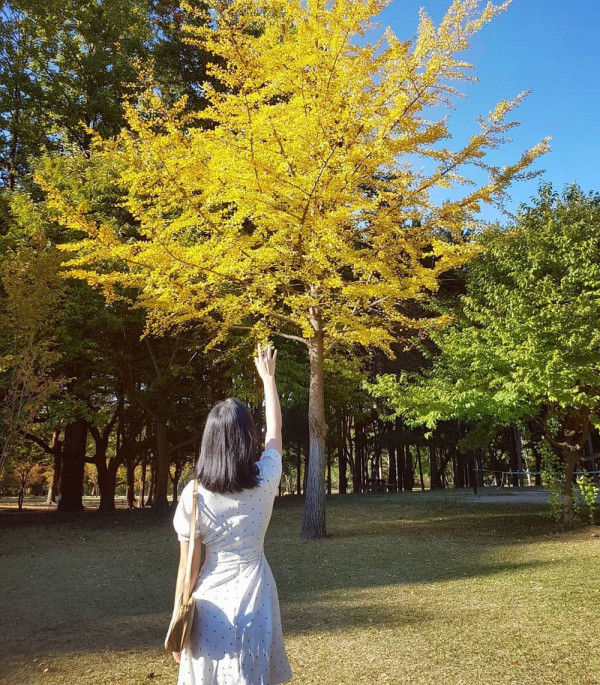 thiên đường mùa thu mang tên Hàn Quốc4