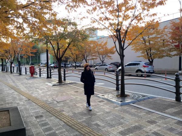 thiên đường mùa thu mang tên Hàn Quốc6