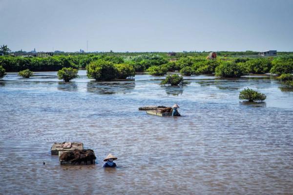 Vườn quốc gia Xuân Thủy3