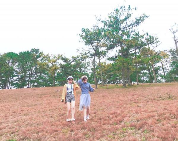 đồng cỏ hồng siêu đẹp trên phố núi Đà Lạt2
