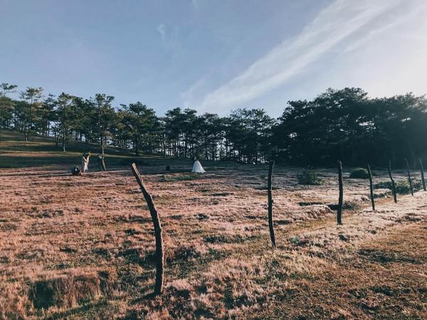 đồng cỏ hồng siêu đẹp trên phố núi Đà Lạt7
