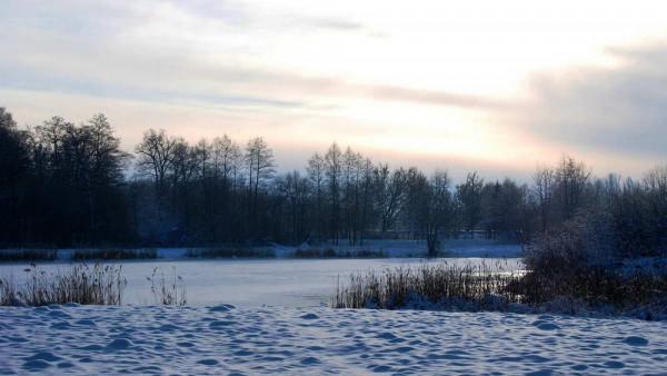 Rừng Bialowieda
