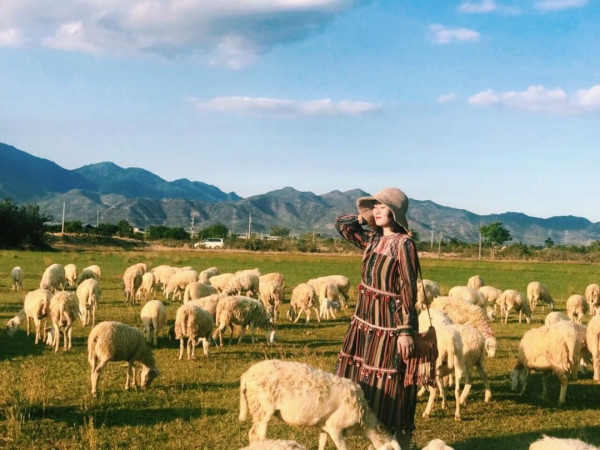 Đồng cừu An Hòa1