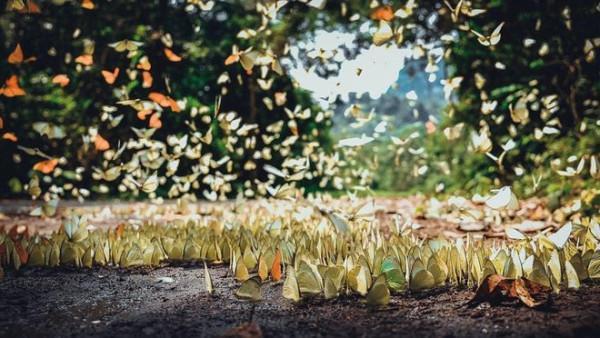 Ngất ngây thiên đường bướm giữa rừng Cúc Phương