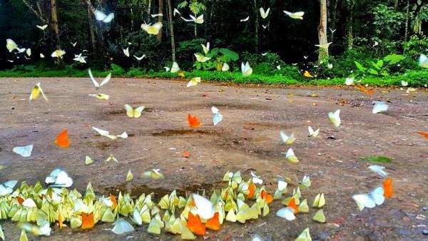 Ngất ngây thiên đường bướm2